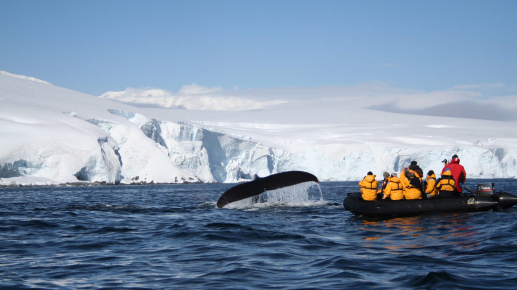 Humpback Whale, Antarctic Peninsula, Antarctica