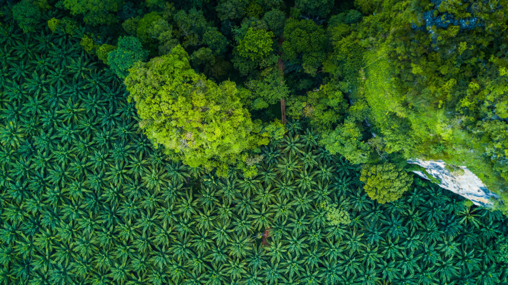 Palm Oil plantation - aerial view