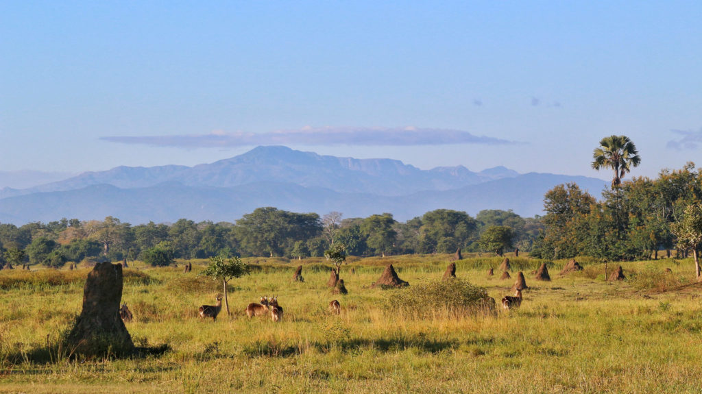 Termite mounds on grass plains, Liwonde National Park, Malawi