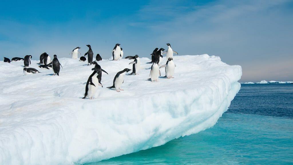 Adelie Penguins on an Iceberg, Antarctica
