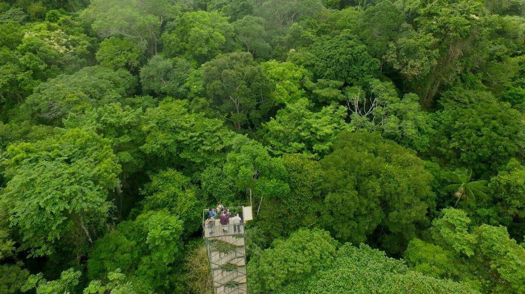Amazon Canopy tower, Refugio Amazonas, Peru