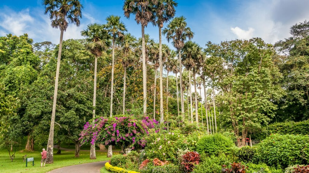 Botanical Gardens, Kandy, Sri Lanka
