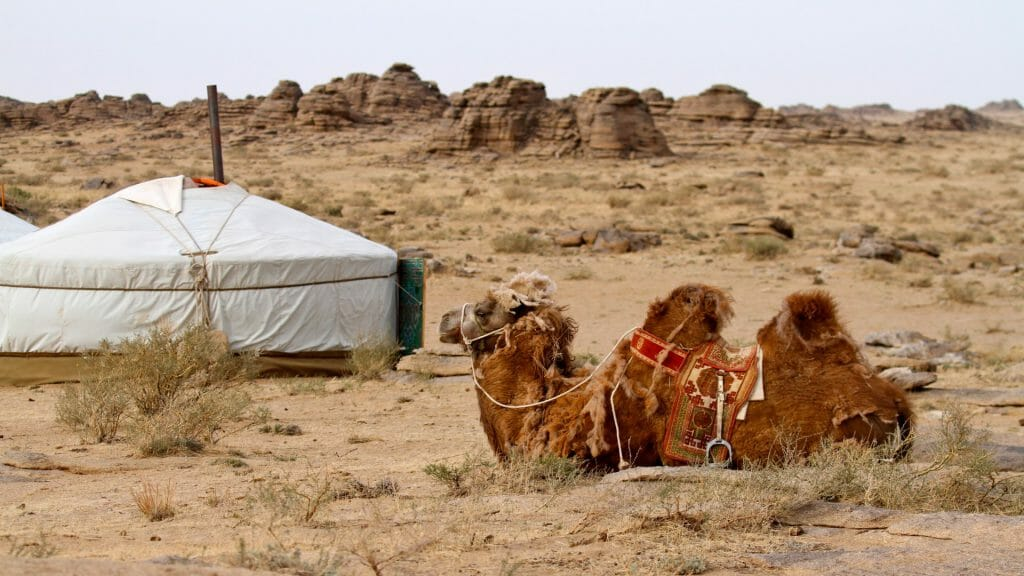 Camel laid down by traditional ger tent amidst rocky desert landscape.
