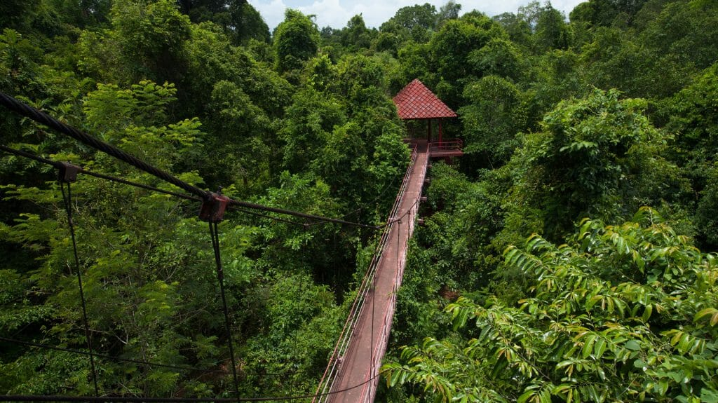 Canopy walk in the primary rainforest, Danum Valley, Malaysia