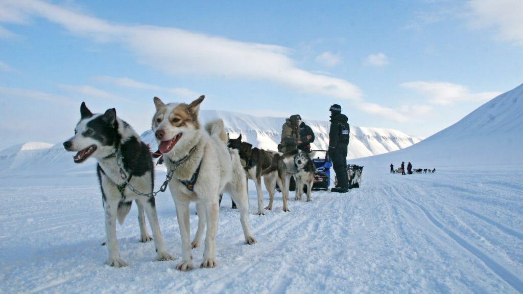 Dog Sledding, Spitsbergen, Svalbard
