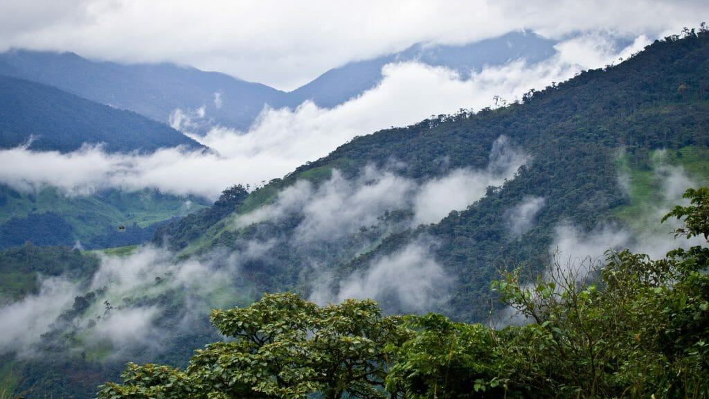 Cloud Forest, Ecuador