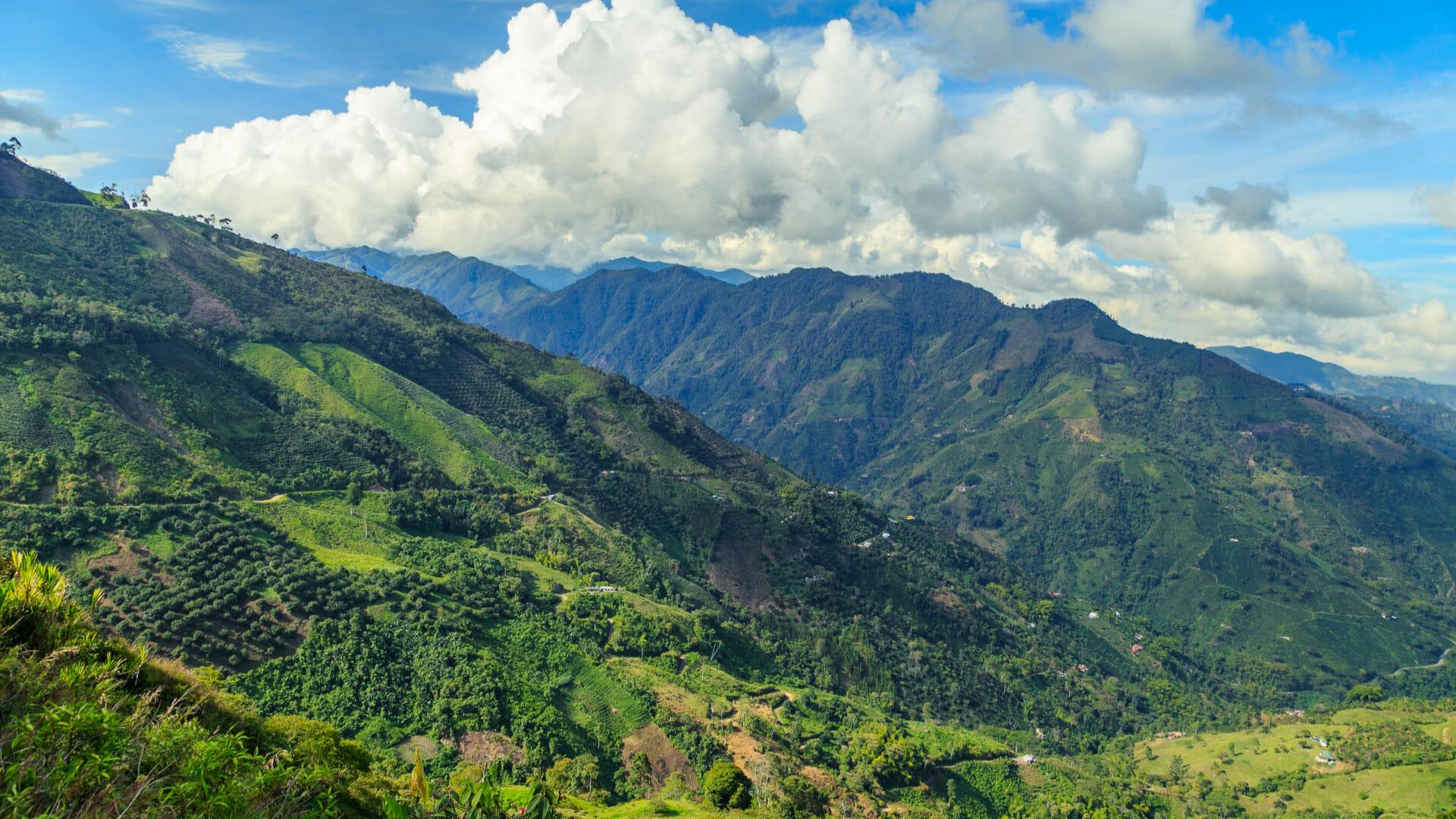 colombian-mountains-coffee-plantation.jp