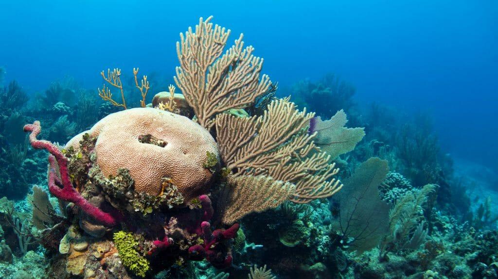 Coral Reef, Coast of Roatan, Honduras