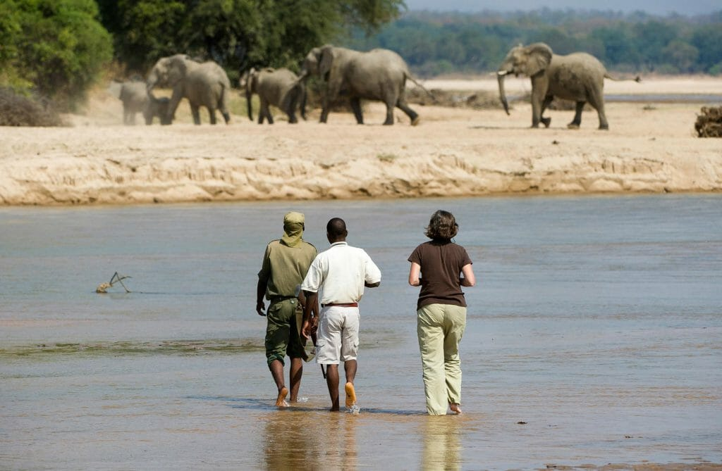 Elephant encounter, South Luangwa, Zambia