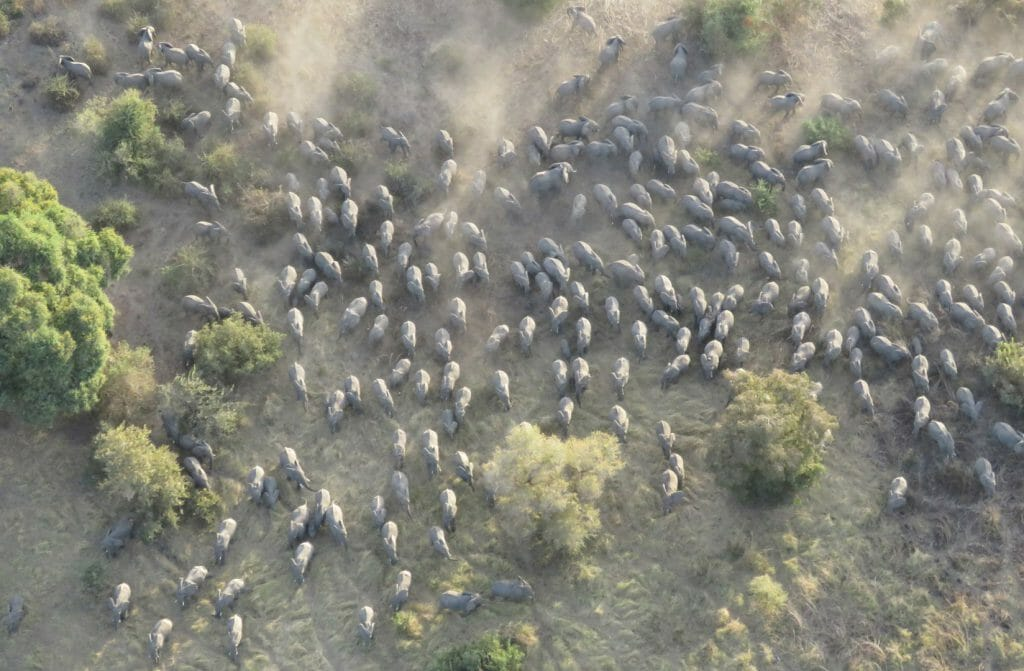 elephants from the air, Zakouma, Chad