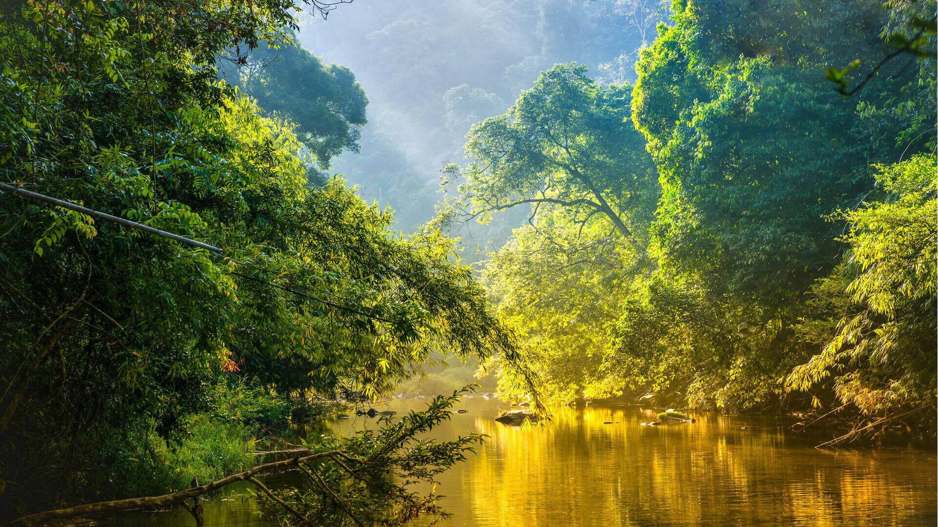 Manaus Full Day Tour On The Amazon River Manaus Brazil