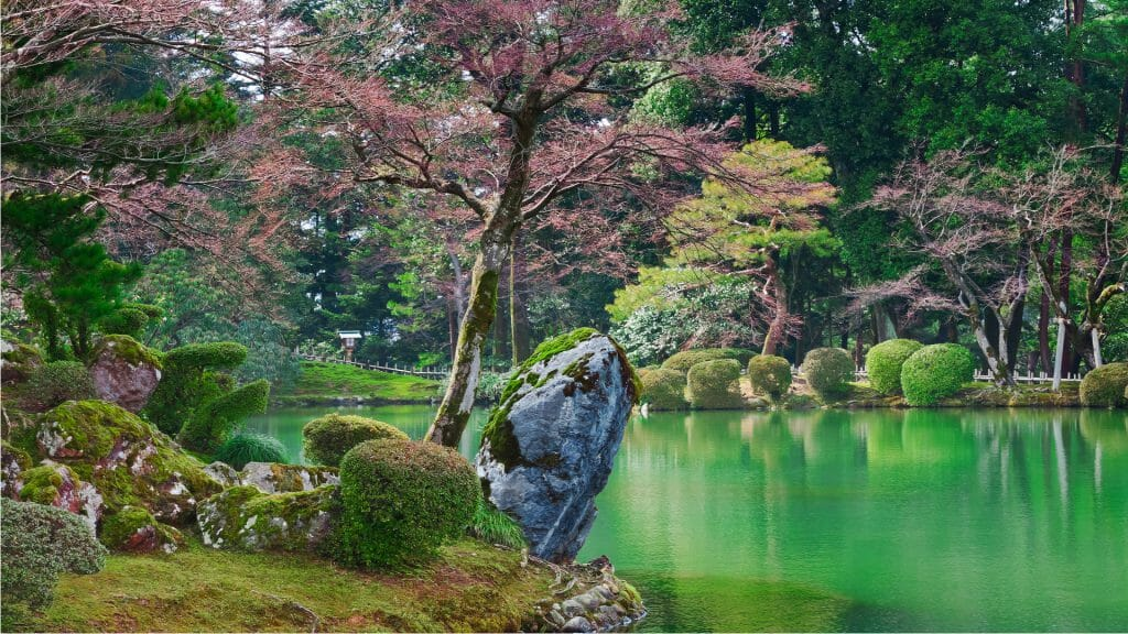 View across emerald water of Japanese garden, rmoss covered rocks in foreground and pink and green trees.