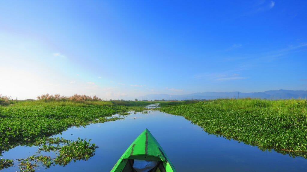 View from small green kayak towards river channel with lush green water farm on either side and bright blue sky.