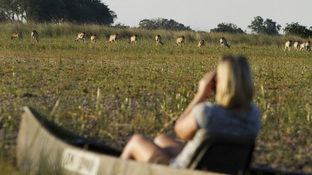 Lechwes from mokoro, Camp Okavango, Okavango Delta