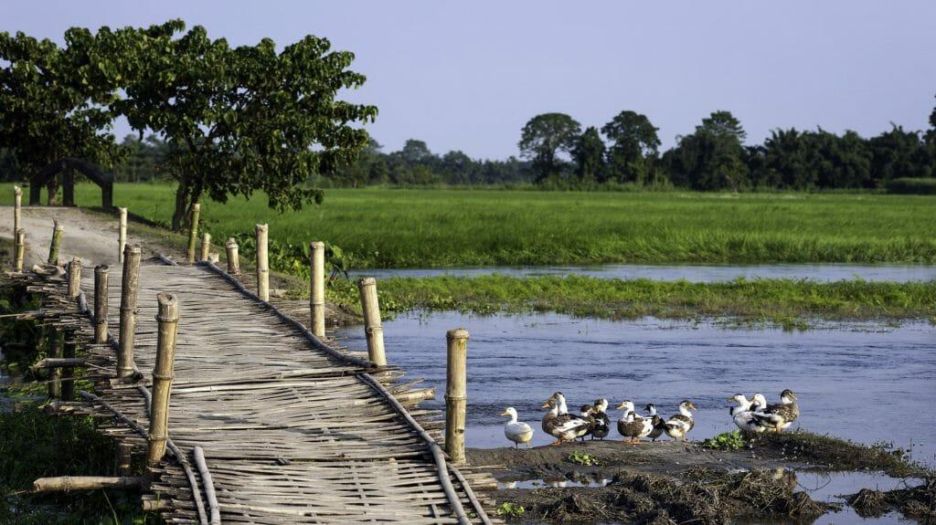 Majuli Island, Assam, India