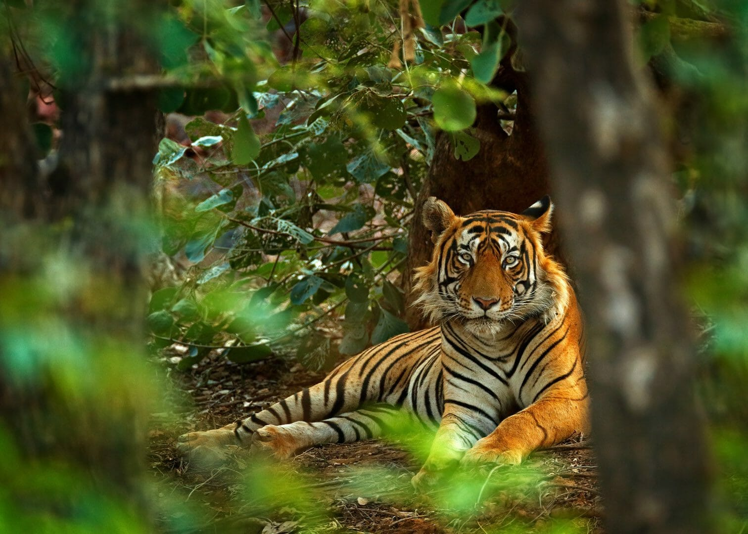 14 Tiger Reserves in India accredited with Global Conservation Assured  Standards