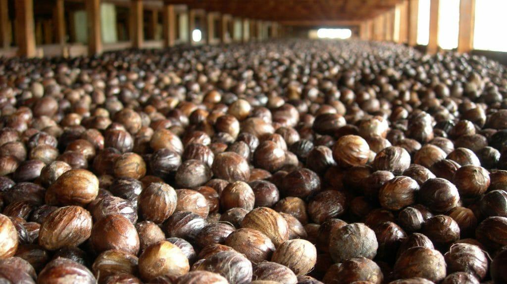 Nutmeg Drying, Grenada