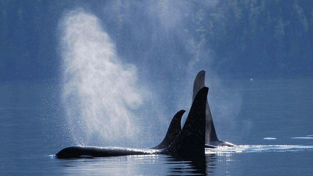 Orcas, Canada