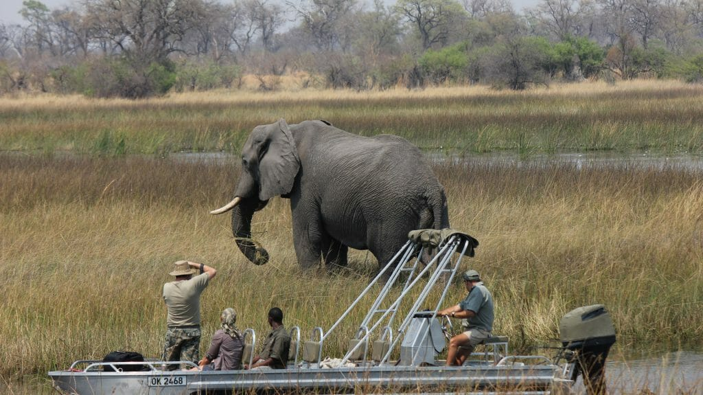 Photographing elephant from boat, Motswiri Camp, Selinda Reserve