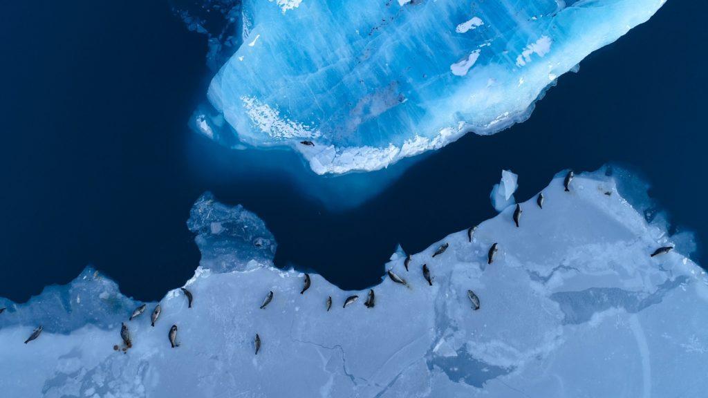 Seals on ice floe, Antarctica