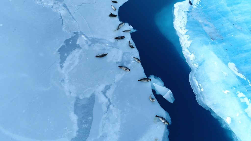 Seals on Ice Floe, Antarctica