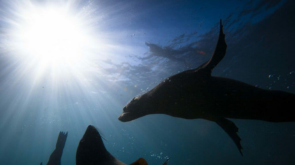 Seals, sun and sea, Cape Town