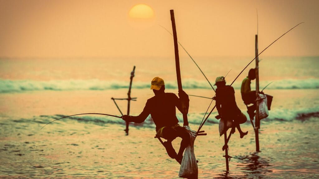 Traditional stilt fishermen, Near Galle, Sri Lanka