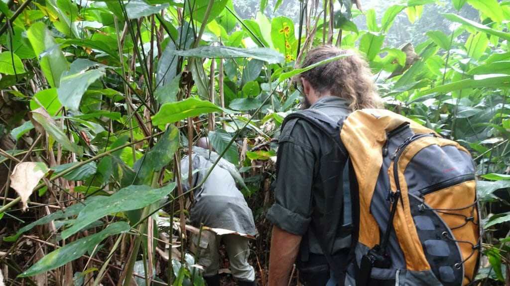 Trekking For Gorillas, Republic of Congo