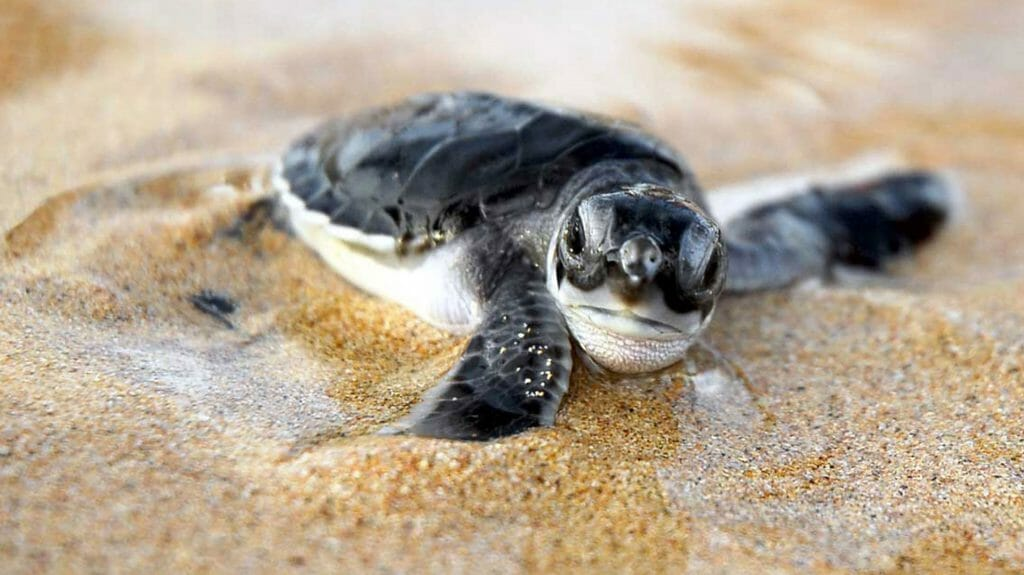Turtle, Principe, Sao Tome And Principe