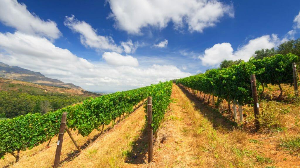 Vineyards in Stellenbosch, Cape Winelands, South Africa