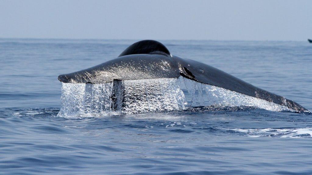 Whales, Trincomalee, Sri Lanka
