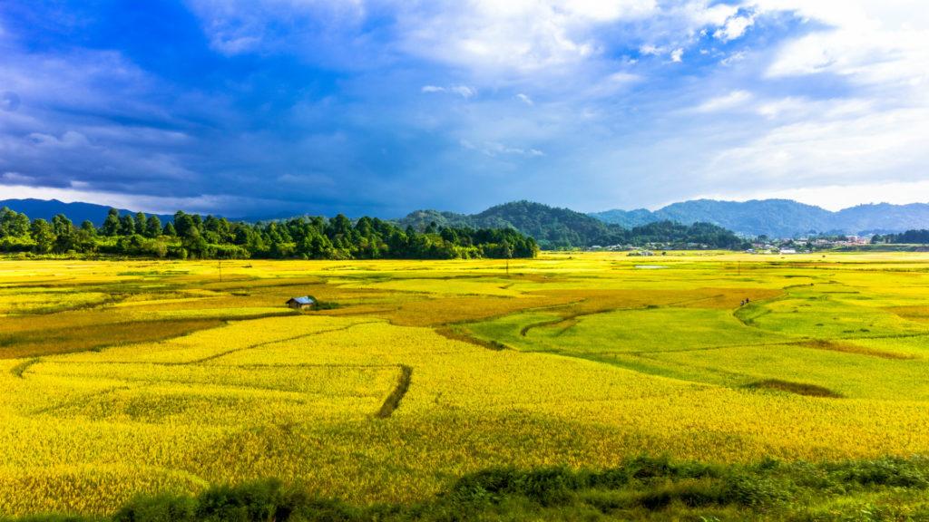 Beautiful Valley of Rice Fields in Ziro, Arunachal Pradesh