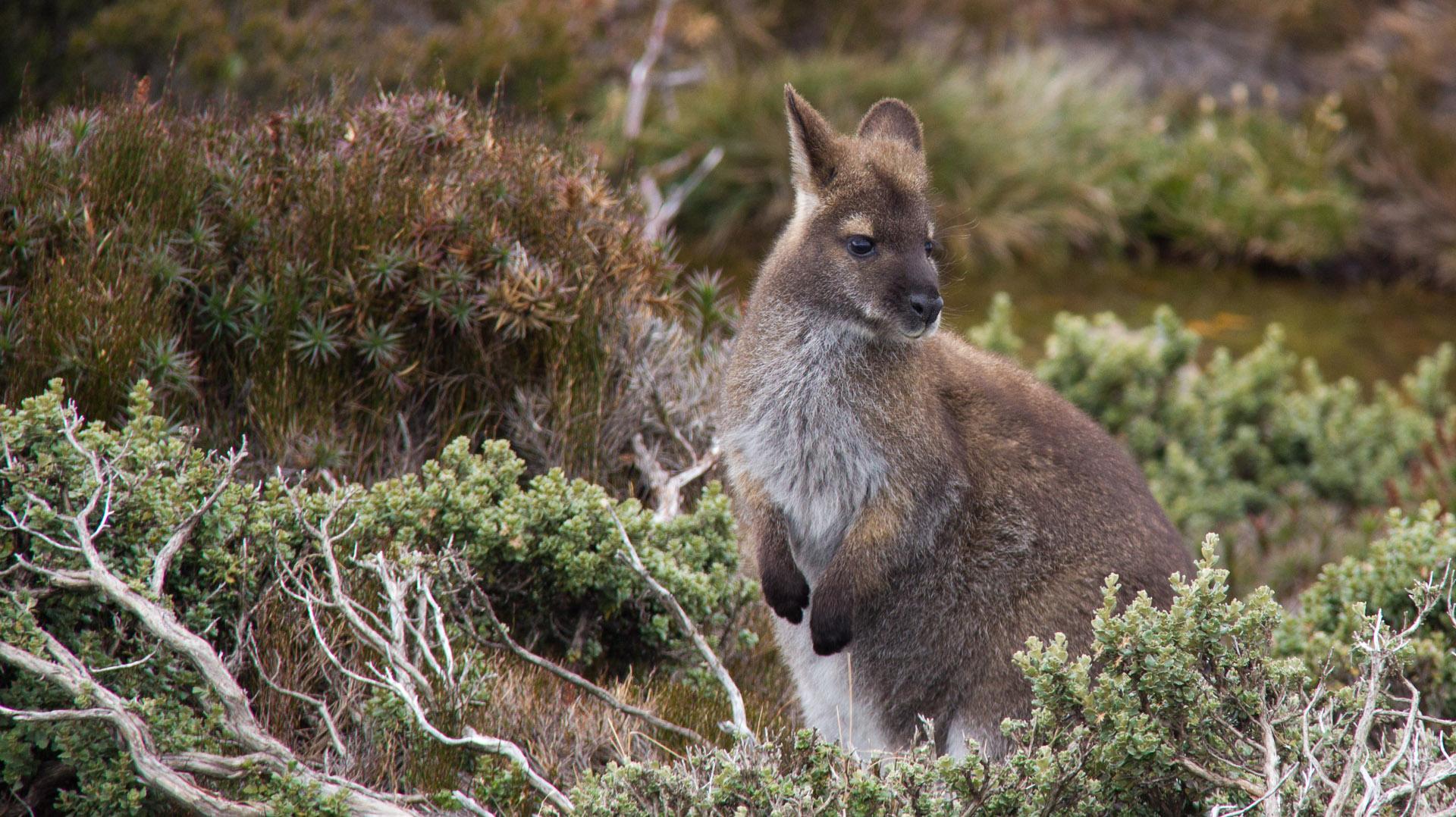Australia Tasmanian Wildlife Photography With Sue Flood Steppes Travel
