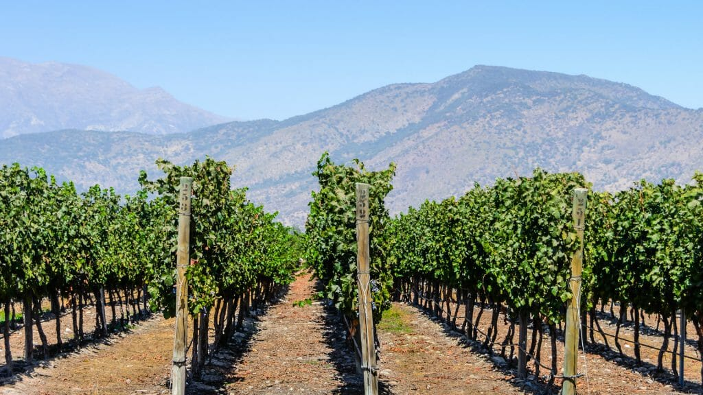 Maipo Valley, Chilean Vineyards