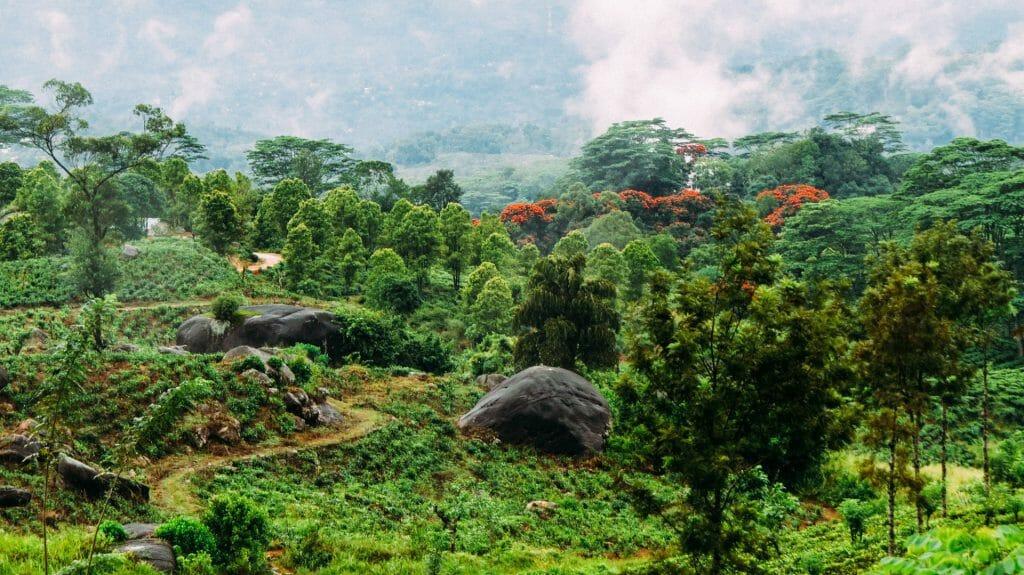 Elkaduwa forest, Sri Lanka