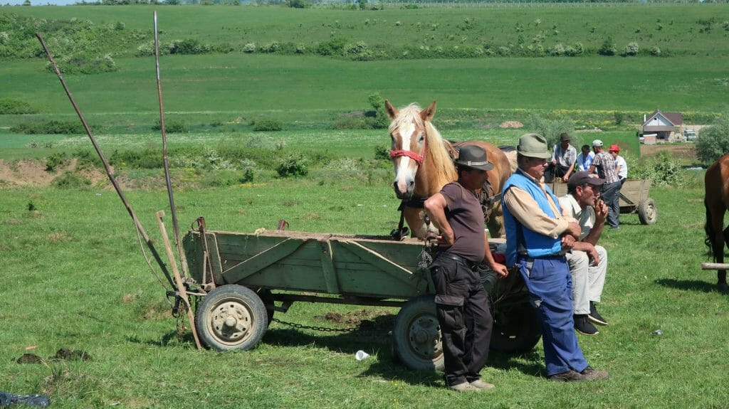 Horse Fair, Sibiu to Viscri drive, Romania
