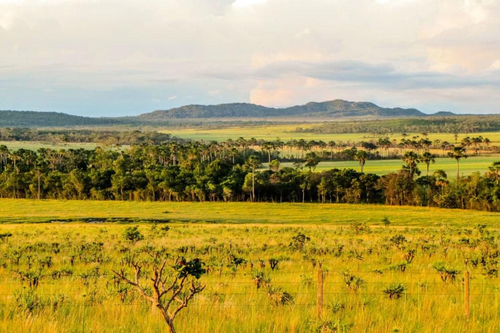 Landscape of the Brazilian cerrado in the Chapada dos Veadeiros, Brazil