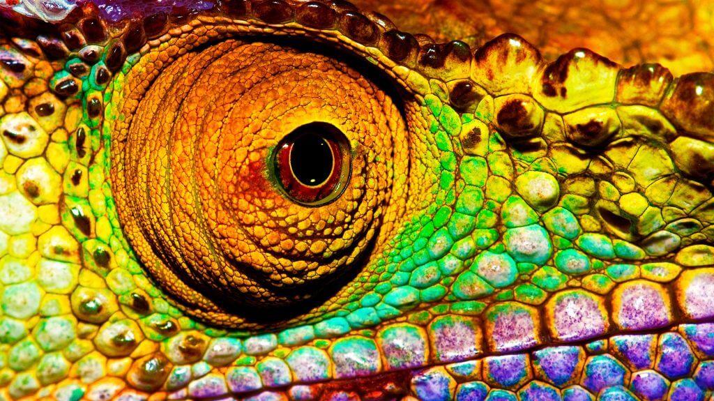 Chameleon Eye, Ranomafana, Madagascar