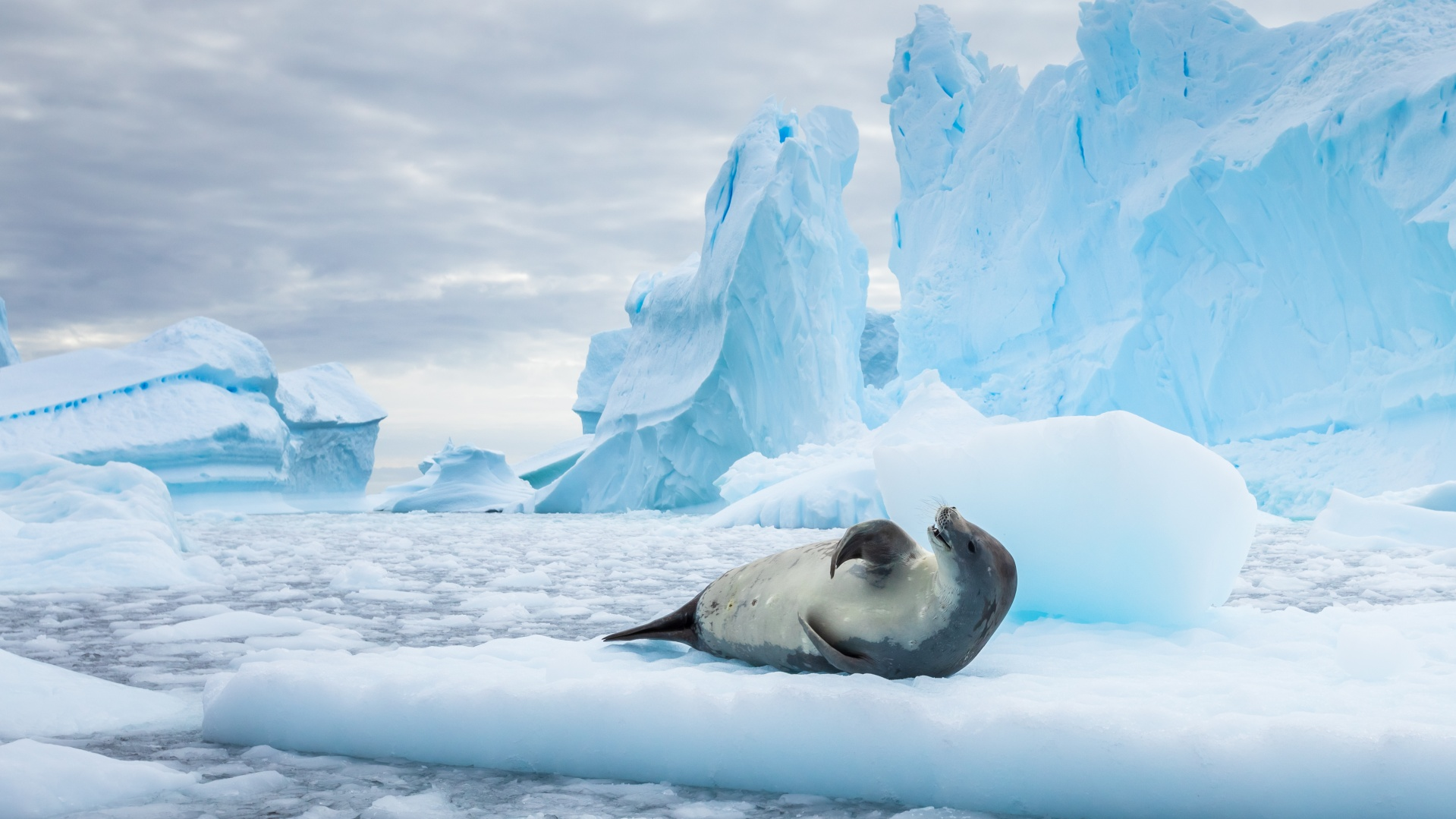 Antarctic Peninsula - Discover Antarctica with Steppes Travel