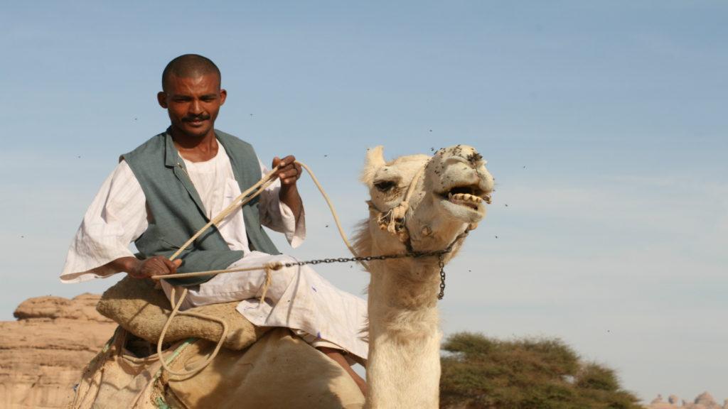Camel herder, Saudi Arabia