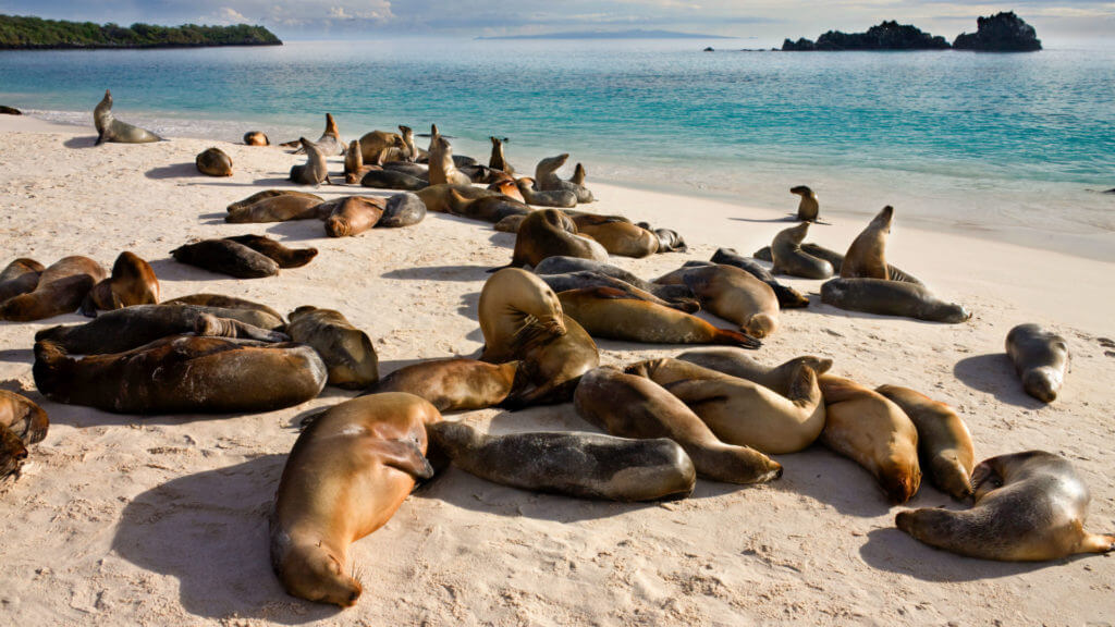Galapagos Sea Lions,  Gardner Bay, Espanola, Galapagos Islands
