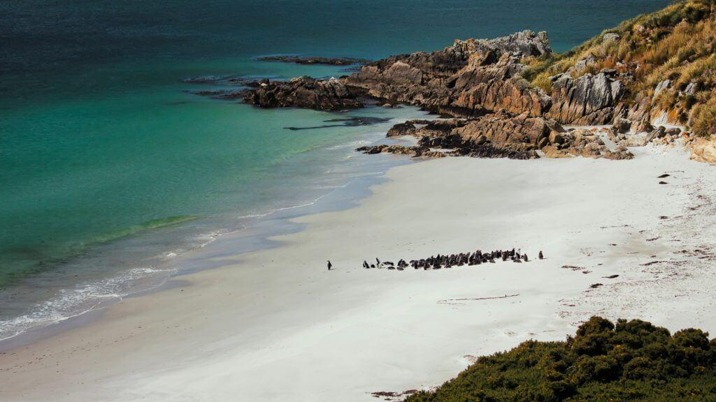 Penguins on a white sand beach