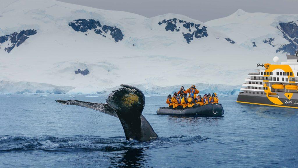 Whale Watching Zodiac, Ultramarine, Quark