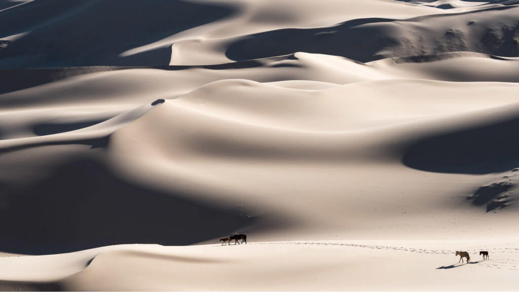 Full frame of pale rolling sand dunes with distant horses crossing in Mongolia
