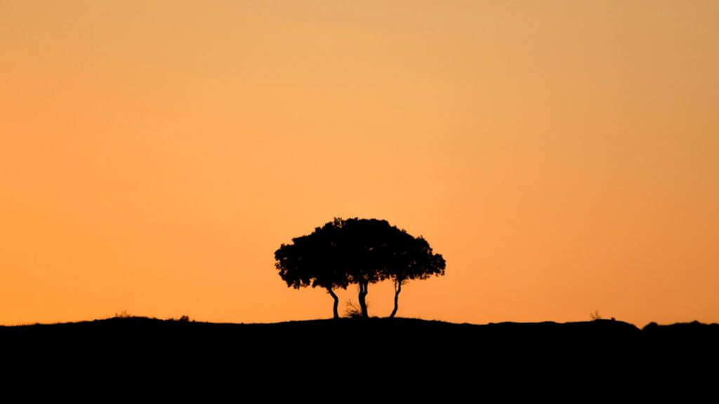 Tree silhouetted against light orange sky.