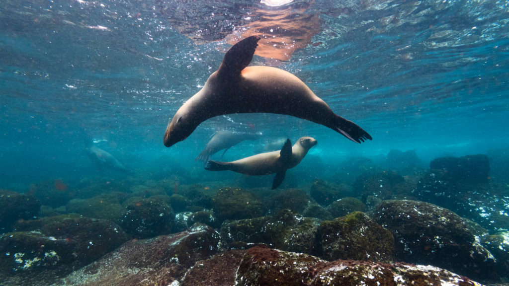 Sea Lions, Galapagos Islands