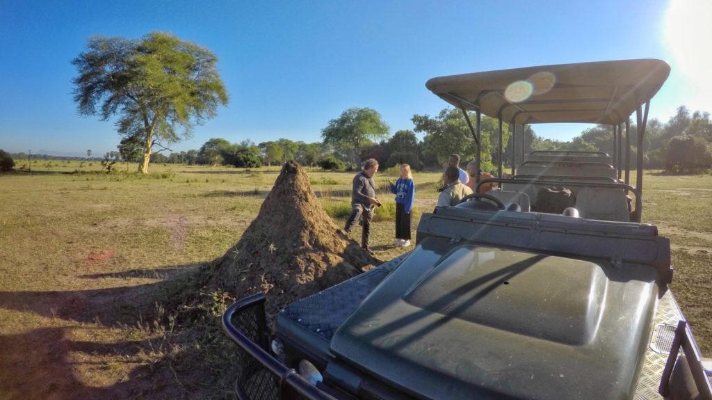 Game drive, Liwonde National Park, Malawi