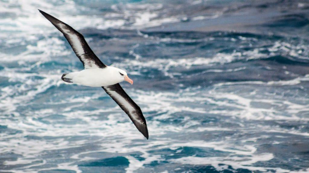 Birding, Antarctica