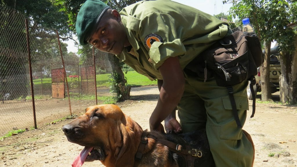 Anti Poaching Bloodhound and Ranger, Virunga National Park, Democratic Republic of Congo