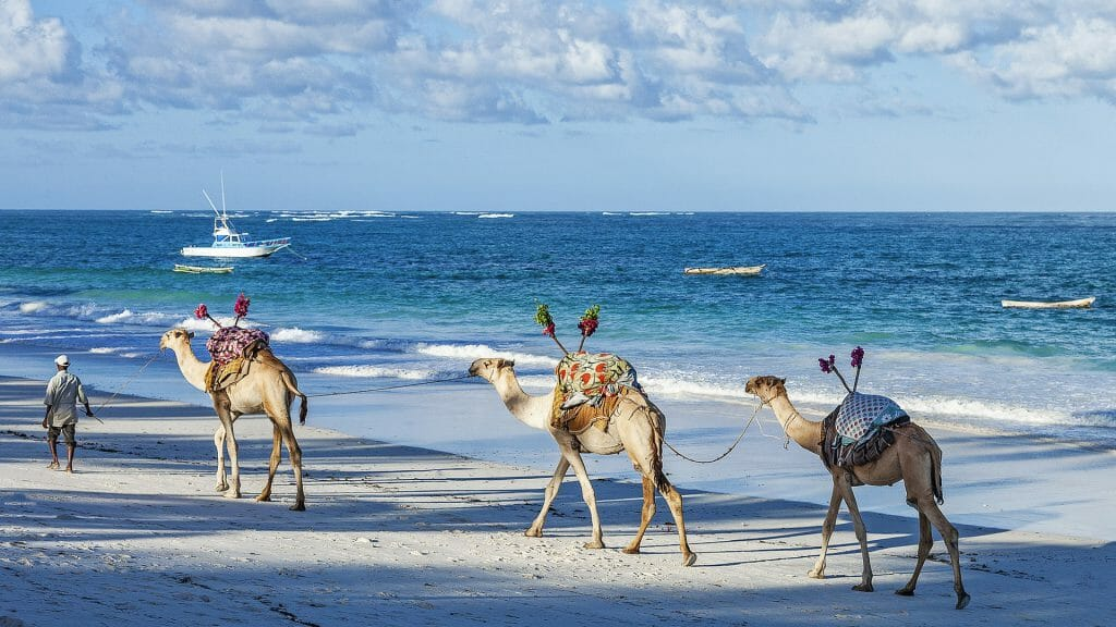 Camels on Diani beach, Kenyan Coast, Kenya